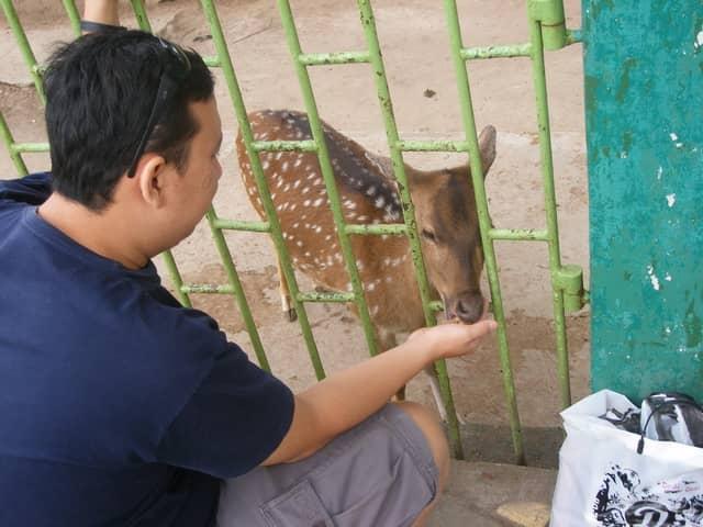 tempat wisata di bukittinggi kebun binatang