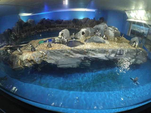 underwater world langkawi - liburan ke langkawi