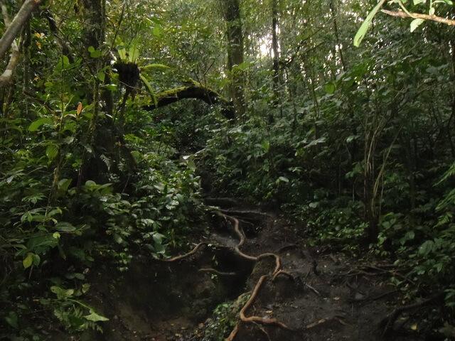 jalur akar gunung kerinci